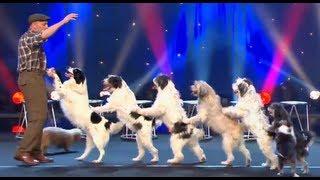 Wolfgang Lauenburger - Dressage de Chiens - Le Plus Grand Cabaret Du Monde