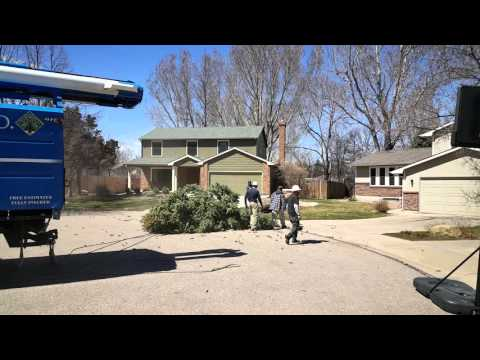 Fort Collins Best Tree Removal Company