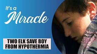Two Elk Save Boy from Hypothermia - It's A Miracle - 6033