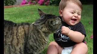 Funny Babies Laughing Excitedly at Cats Compilation    BABY AND PET