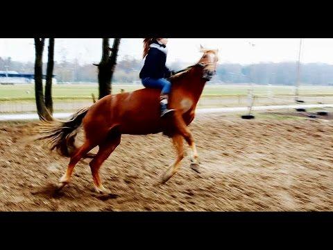 После трех дней отдыха   Веселая лошадь    Родео без седла