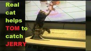 Funny animals video😂😂. Cat is trying to catch Jerry!!!