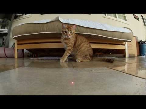 GoPro HERO2: Cats vs. Laser Music Videos