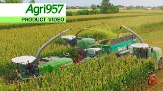 SILAGE XXL: 3x FENDT KATANA, 85 & 65 - NATURE GREEN | WHEAT and CORN SILAGE in ITALY - Agri957 4K