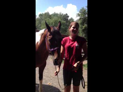 Horse And Woman Getting Married video