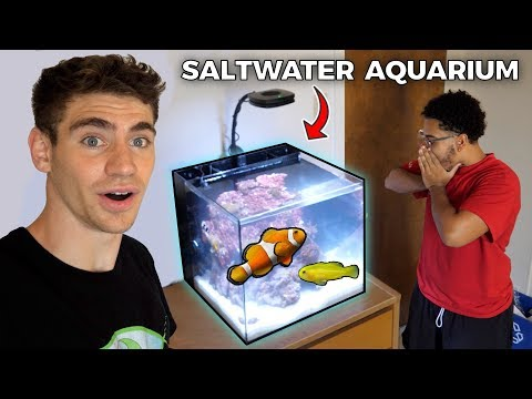 His *DREAM* SALTWATER AQUARIUM!! ... (College Tank)