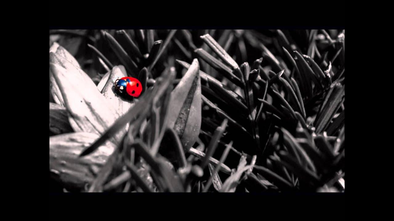 Макароны гнезда и пошагово