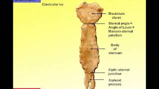 Magdy Said, Anatomy series,Thorax 3, Features of ribs and sternum