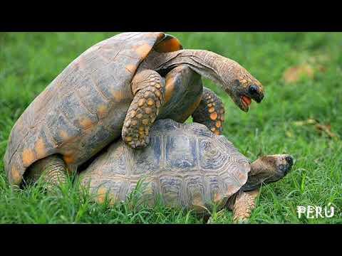 Paisajes de Tarapoto - Perú : Vida Natural