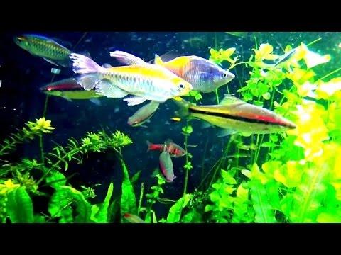 Прекрасные рыбки и красивый аквариум