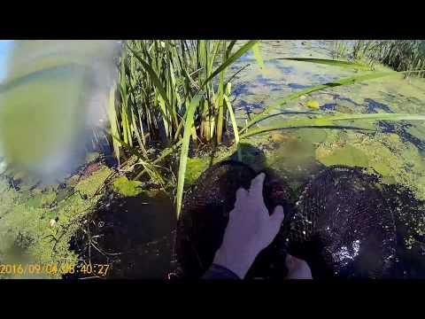 ловля карася на морду видео