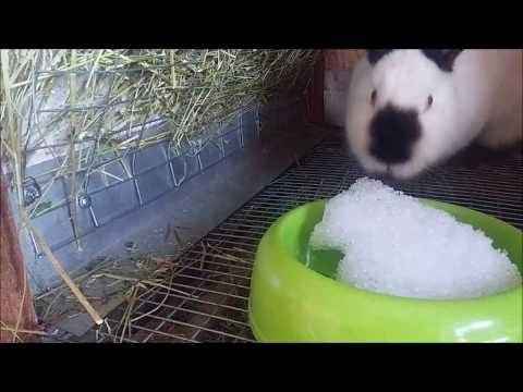1#. Клетки для кроликов