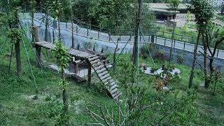 Happiness Village Baby Panda Garden 07-28-2018 06:44:34 - 07:44:38