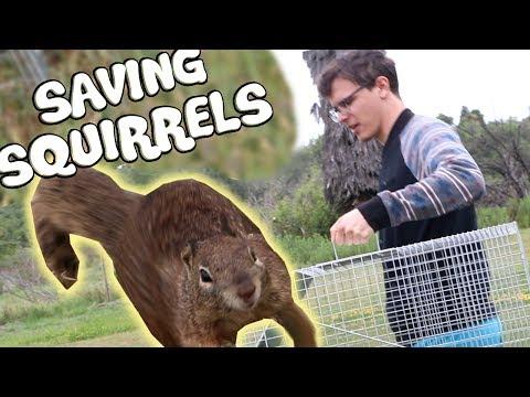 Trapping and Relocating Squirrels - An Examination thumbnail