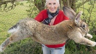 दुनिया के 7 सबसे बड़े जानवर 7 World's  largest /Biggest animal