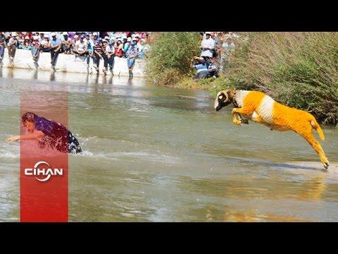 Sudan Koyun Geçirme yarışması UNESCO yolunda