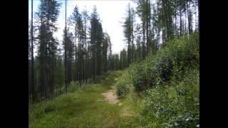 Watch Eva Cassidy Tall Trees In Georgia video