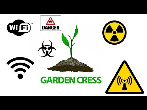 GARDEN CRESS DEATH BY WIFI DANGER planted 04/14/2016