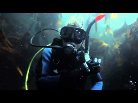 Just another day scuba diving in Cape Town South Africa