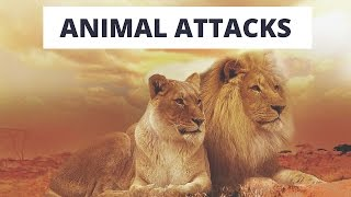 When animal attacks Compilation
