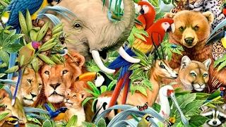 ANIMALS ALPHABET A TO Z