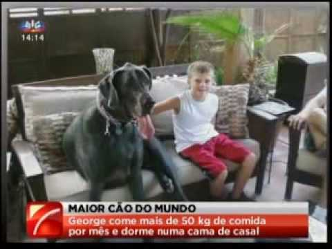 Giant George é o maior cão do Mundo Music Videos