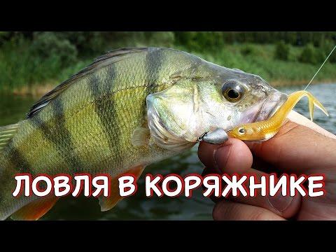 ribalka-okunya-na-vobler