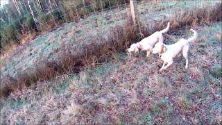 accident fatal en Bretagne pour cette bécasse !!! 31-12-2015