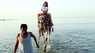 Hurghada Ägypten Kamelreiten am Meer 2017 MK