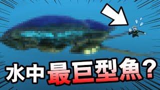 發現水中「最巨型的怪魚」!背上還長了「炮台」!?: Subnautica #3