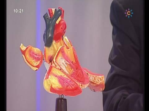 Válvulas Cardíacas Médicos Mira la Vida