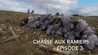 Chasse aux ramiers épisode 3