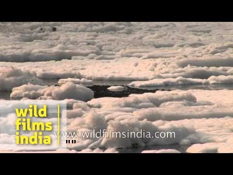 This is the Yamuna river water we drink in Delhi