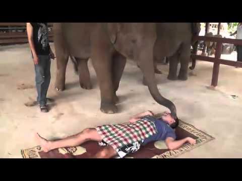 Супер массаж слоном в Тайланде.