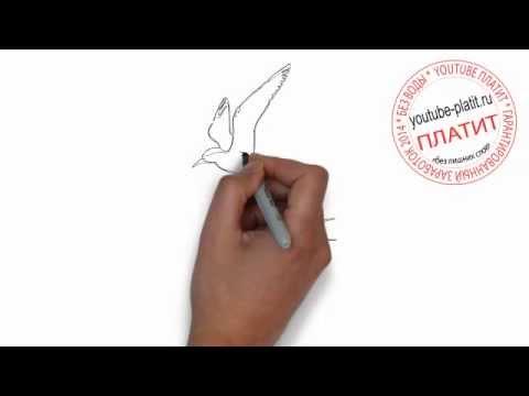 Видео как нарисовать пару карандашом поэтапно