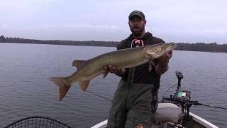 Northern WI  Muskie on a Posseidon Swimbait