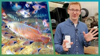 How To Film Underwater Using Your Smartphone - Cheap Shot Challenge - BBC Earth Unplugged