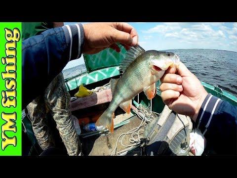 ловля рыбы судака окуня