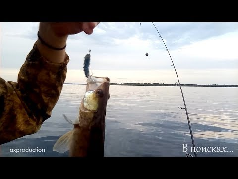 ловля судака на кубани на отводной поводок