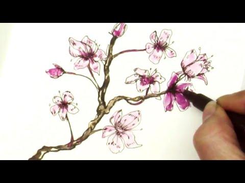 Pen & Ink Tutorial How to Draw  Sakura Cherry Blossom Branch