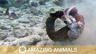 Xem Lươn Biển và bạch Tuột Đánh Nhau