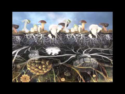 Paul Stamets and John B. Wells - Mushrooms & Environment