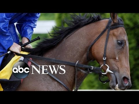 Winning Horse Dies After First Race at Pimlico