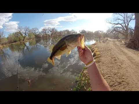 Sight Fishing for Largemouth Bass
