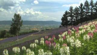 北海道観光映像(中富良野町)
