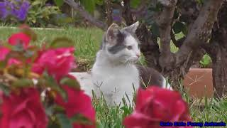 Cute Cats Funny Animals Water Compilation C