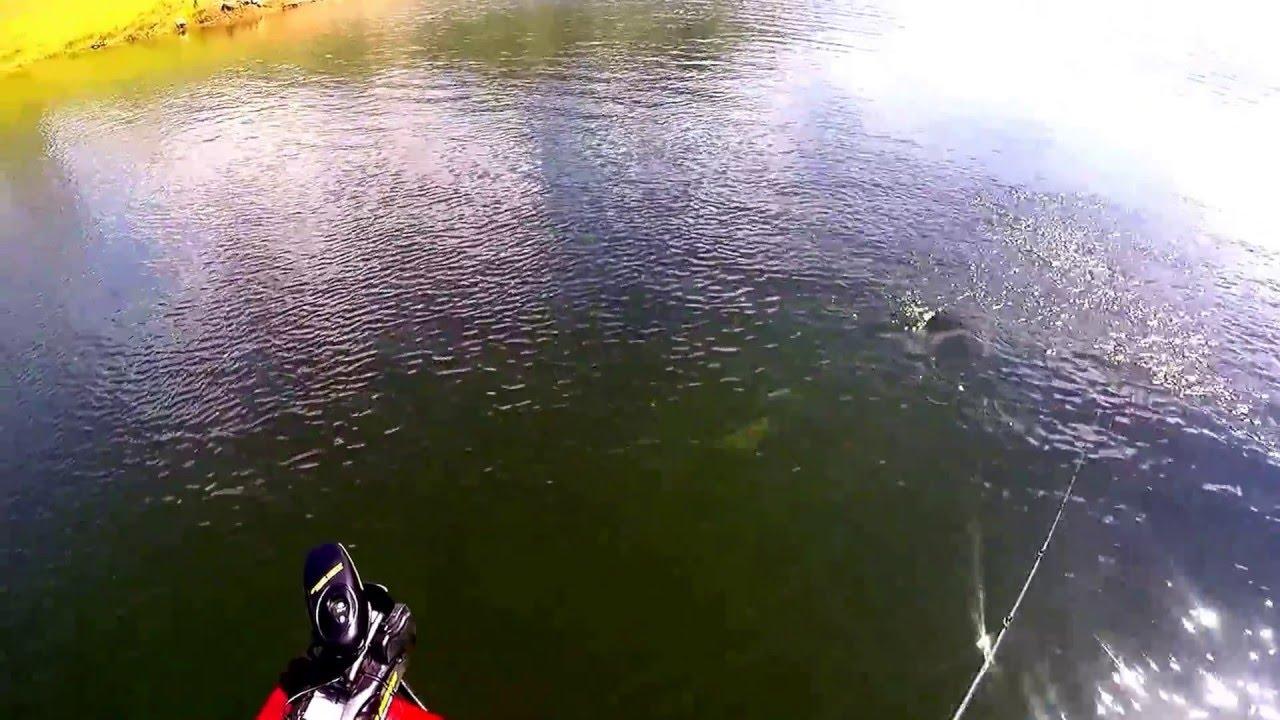 Huge bass at millerton lake fishing bay for Millerton lake fishing