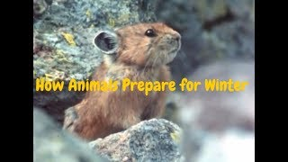 How Animals Prepare for Winter and Survive the Cold