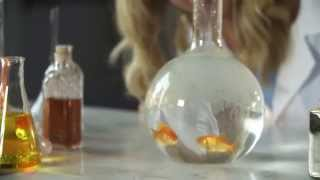 The Fourteenth Goldfish | Book Trailer