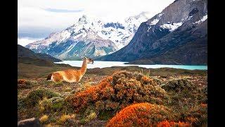 Nam Mỹ hoang dã -  Phần 2